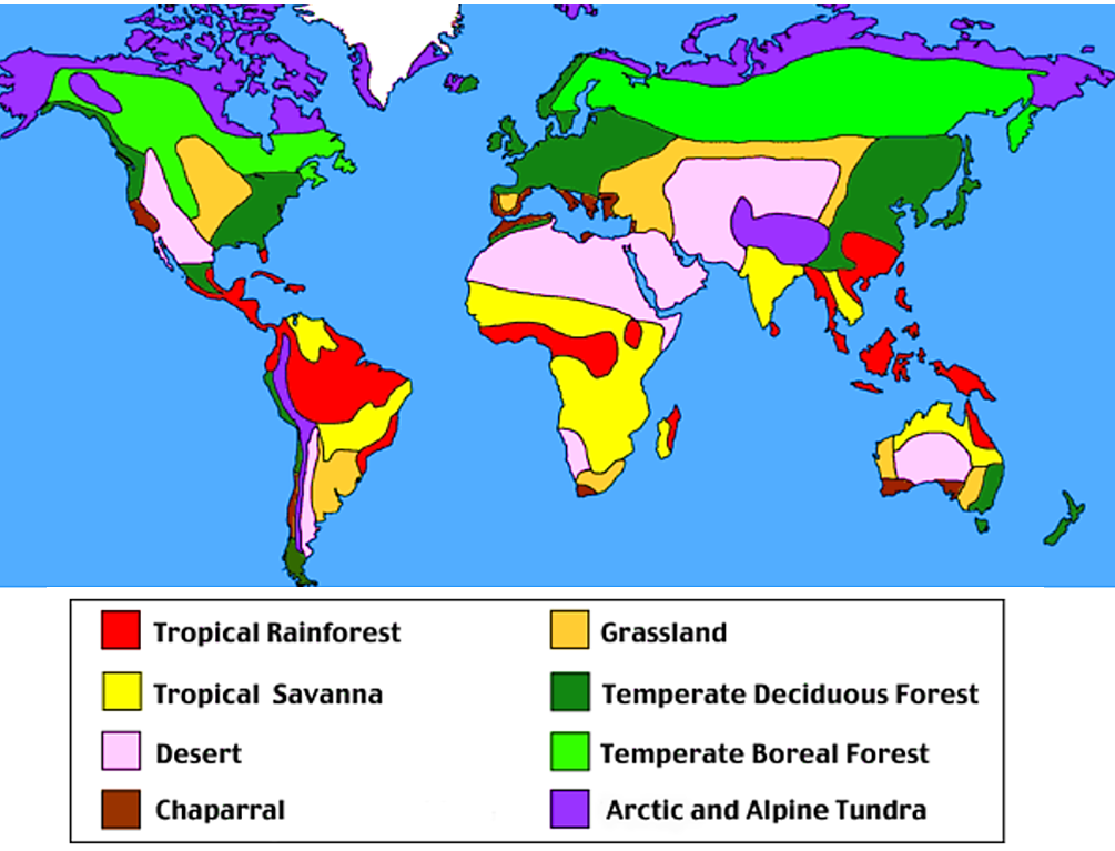 Animals and world map  Tropical Rainforests